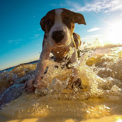 image of a dog on a surfing holiday